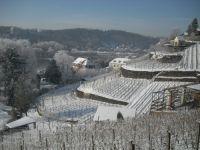 Bild zu Winterliche Weinprobe